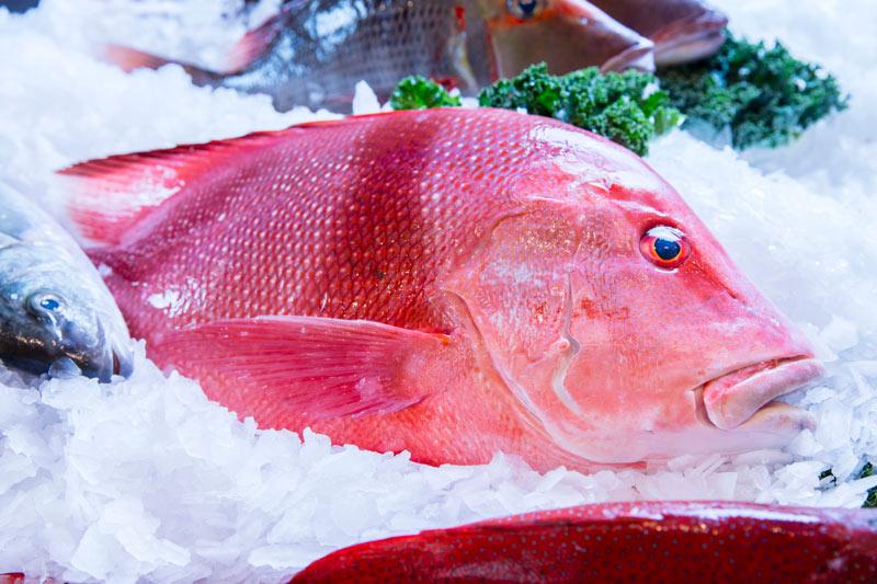 fish-gallery-07
