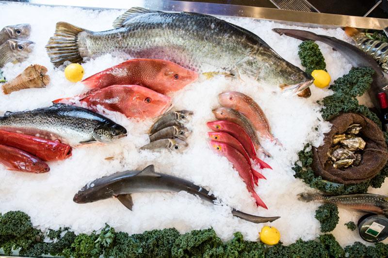 fish-gallery-10