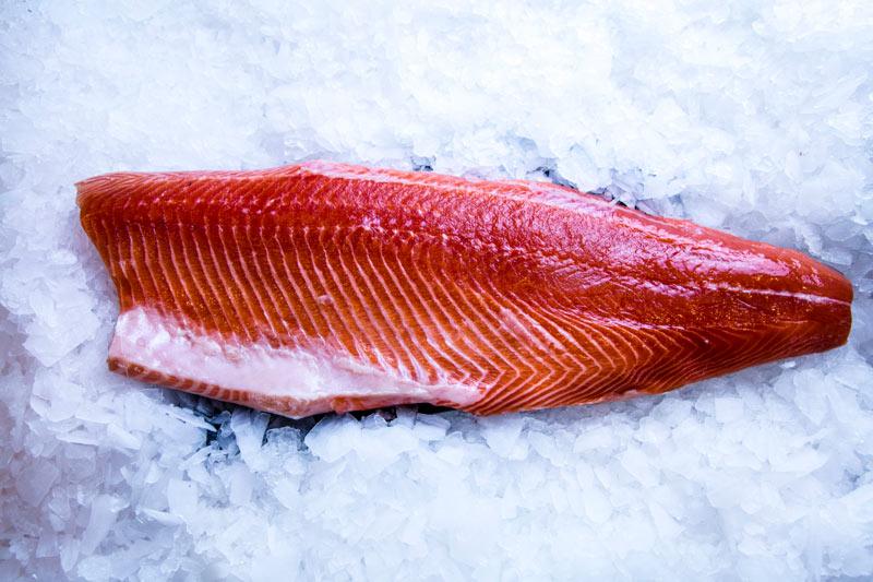 fish-gallery-14